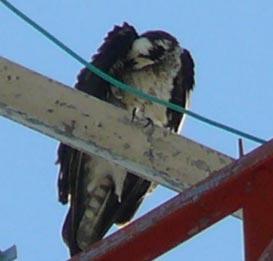 Bird on a radio tower