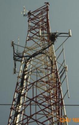birds nest on a tower